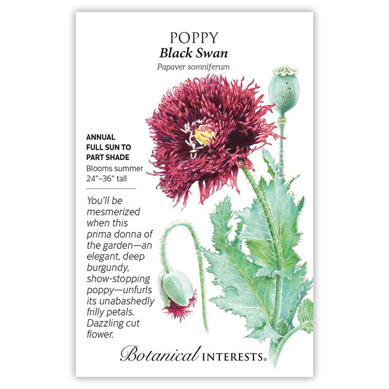 Black swan poppy seeds view all flowers botanical interests tap to expand mightylinksfo