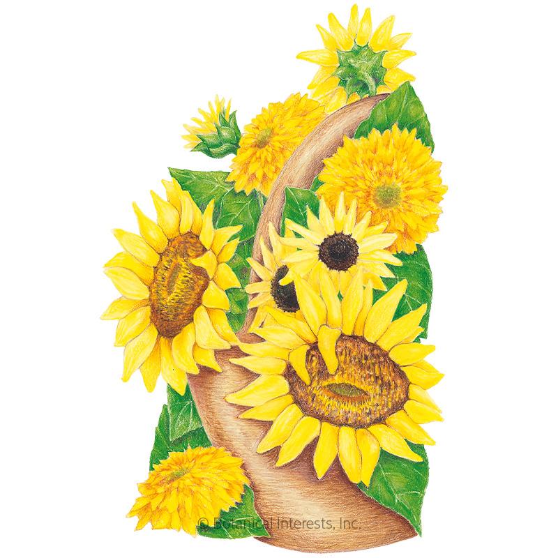 Elves Blend Dwarf Sunflower Seeds