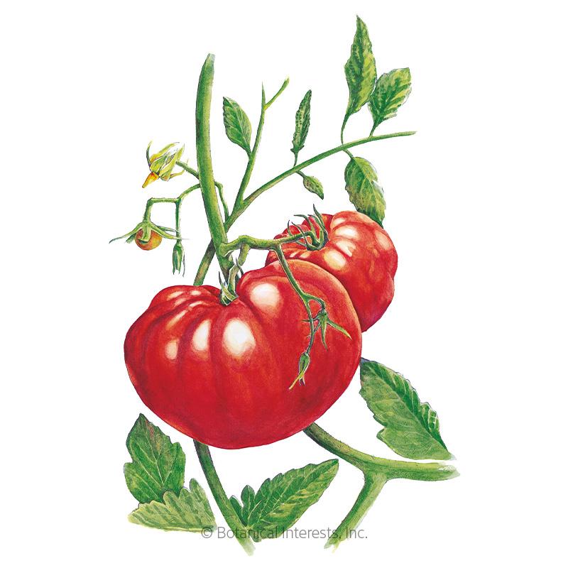 Beefsteak Pole Tomato Seeds