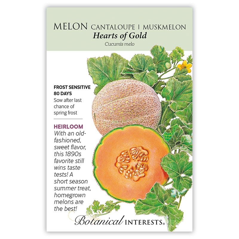 Hearts Of Gold Cantaloupe Muskmelon Melon Seeds Vegetables Botanical Interests These melons are netted (rough skin) and usually slip from their stems. hearts of gold cantaloupe muskmelon melon seeds
