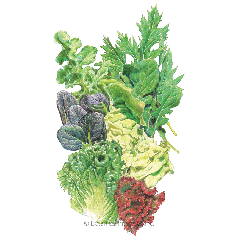 Chef's Medley Mesclun Lettuce Seeds