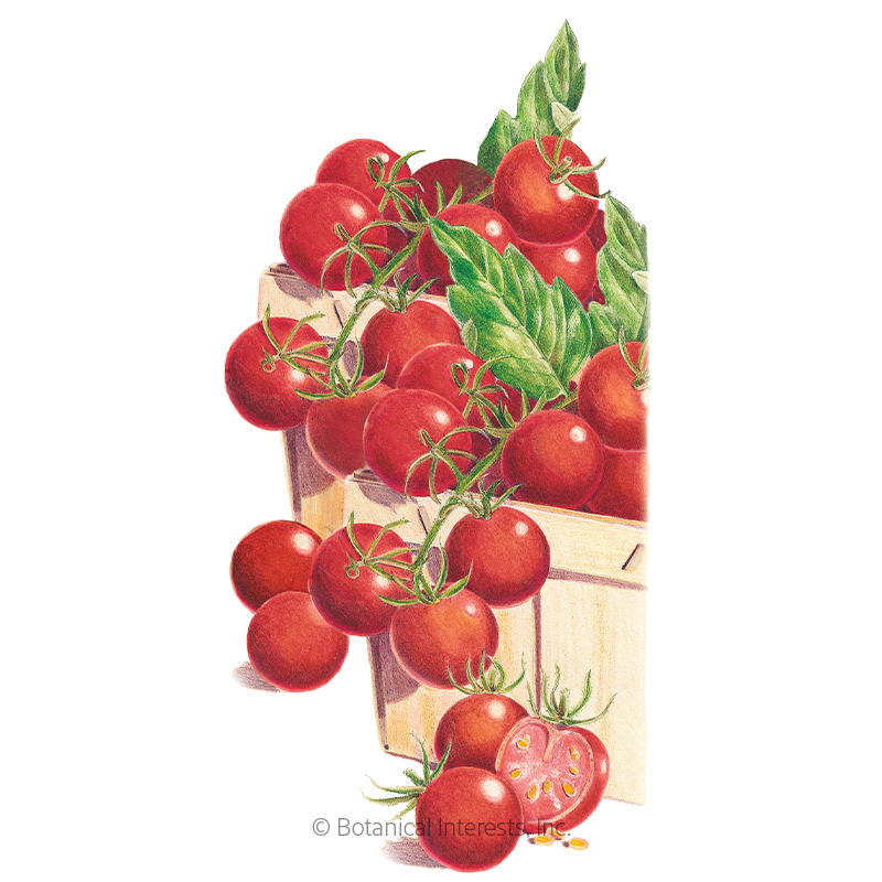 Sweetie Pole Cherry Tomato Seeds