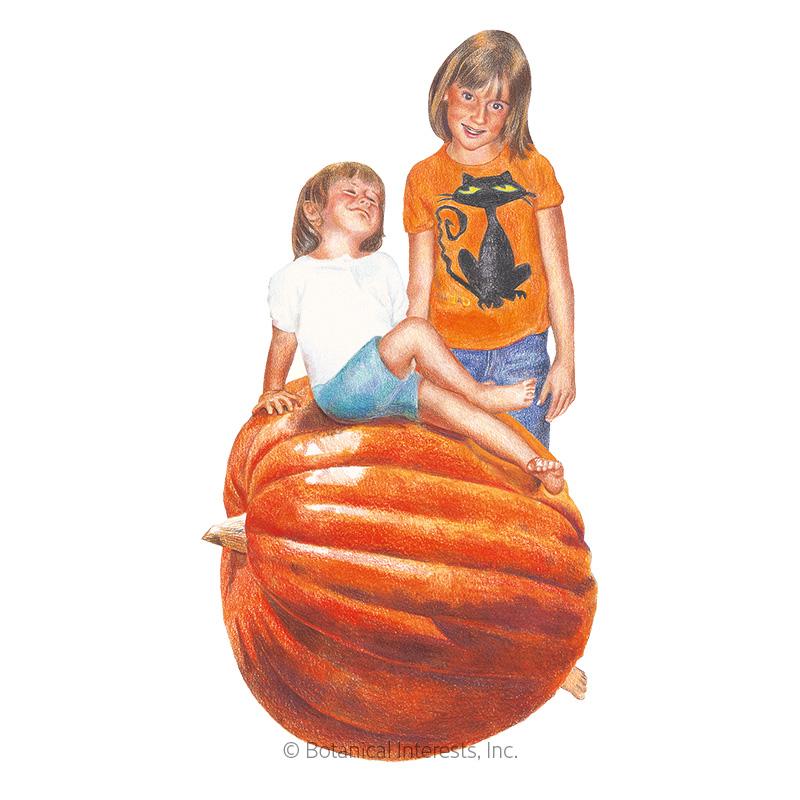 Big Max Pumpkin Seeds
