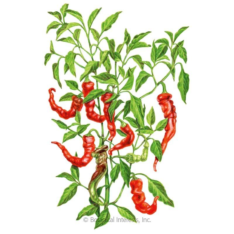 Jimmy Nardello Sweet Pepper Seeds