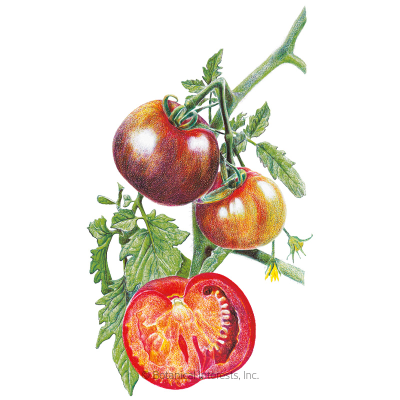 Black Krim Pole Tomato Seeds