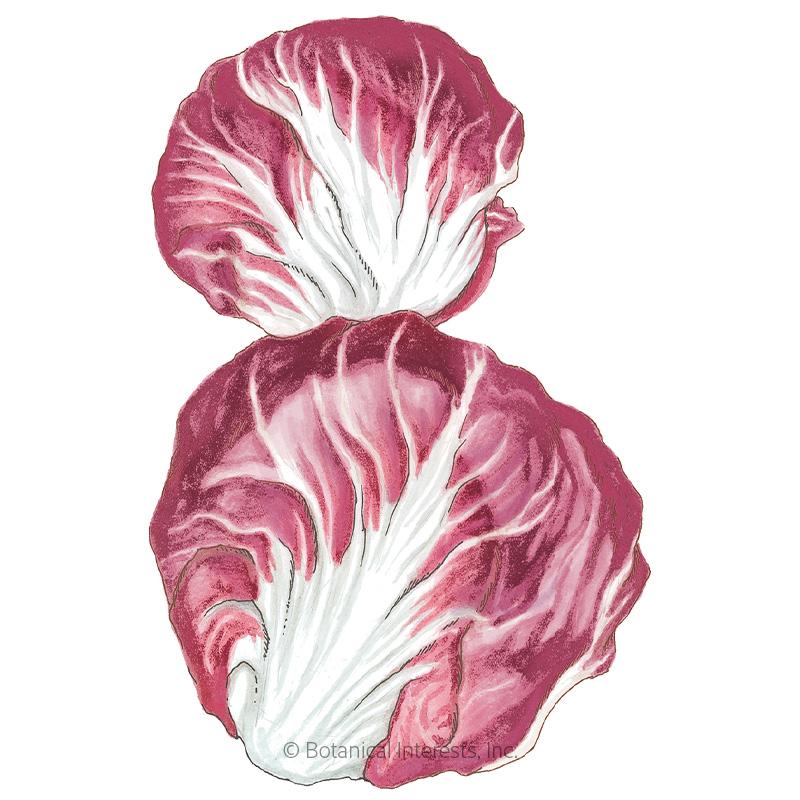 Palla Rossa Mavrik Radicchio Seeds