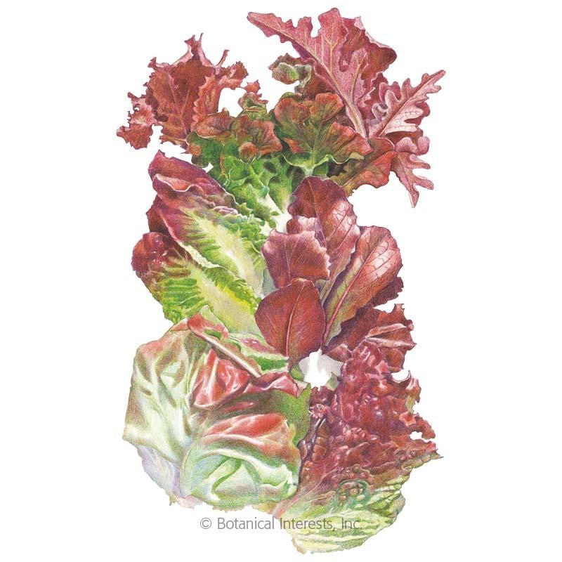 Valentine Mesclun Lettuce Seeds