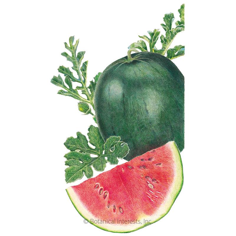 Sugar Baby Watermelon Seeds Organic