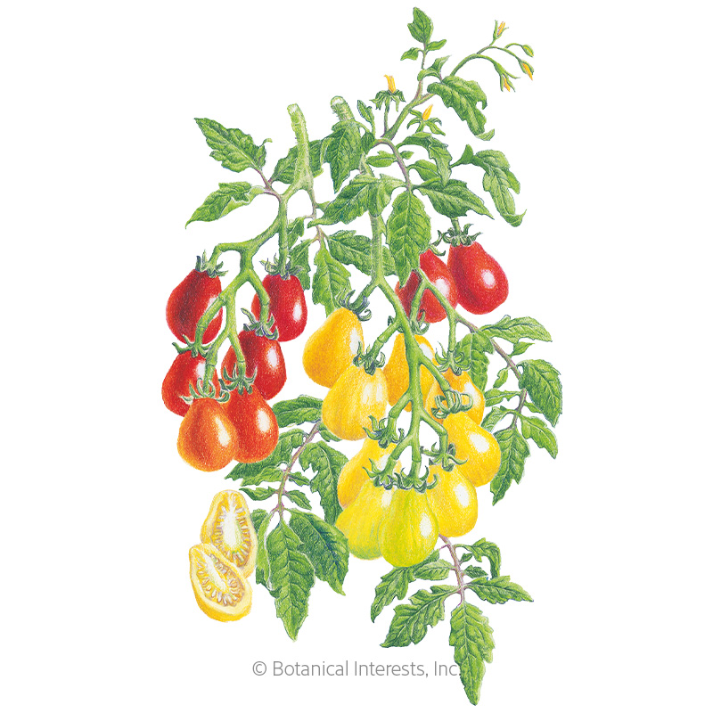 Red & Yellow Pear Blend Pole Cherry Tomato Seeds