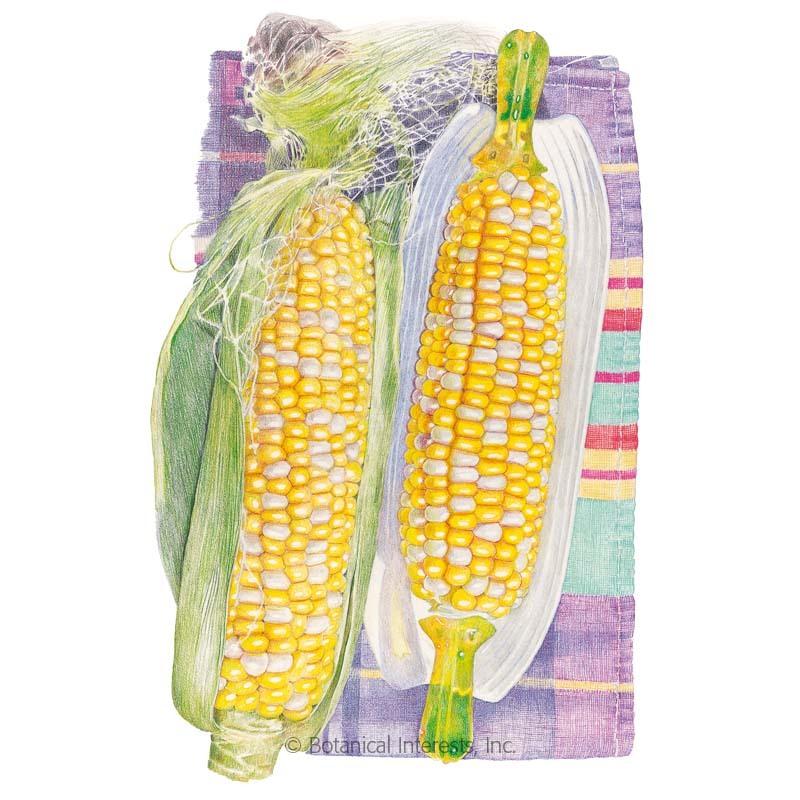 Honey and Cream Sweet Corn Seeds