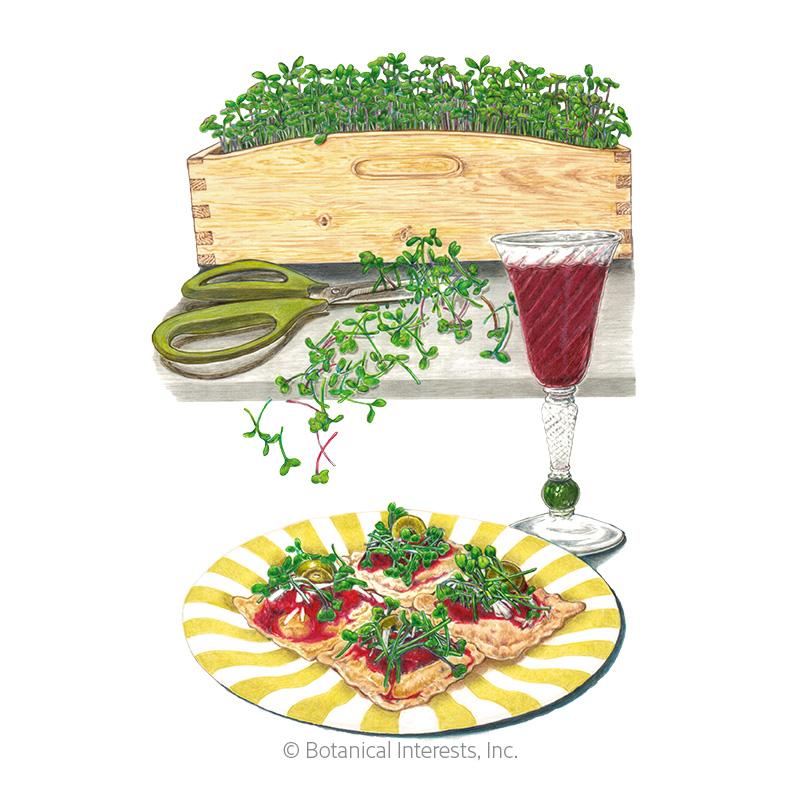 Italian Amaro Blend Microgreens Seeds
