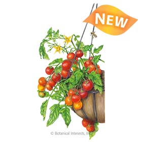 Cherry Falls Bush Cherry Tomato Seeds