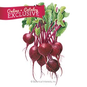 Robin Beet Seeds - New - Online Exclusive