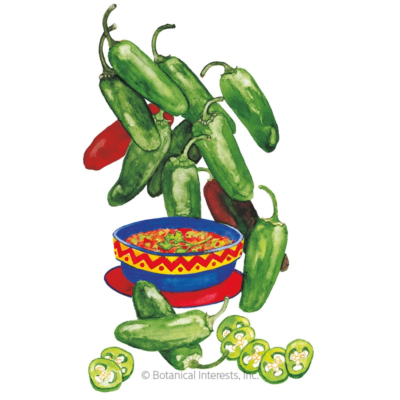 Early Jalapeno Chile Pepper Seeds