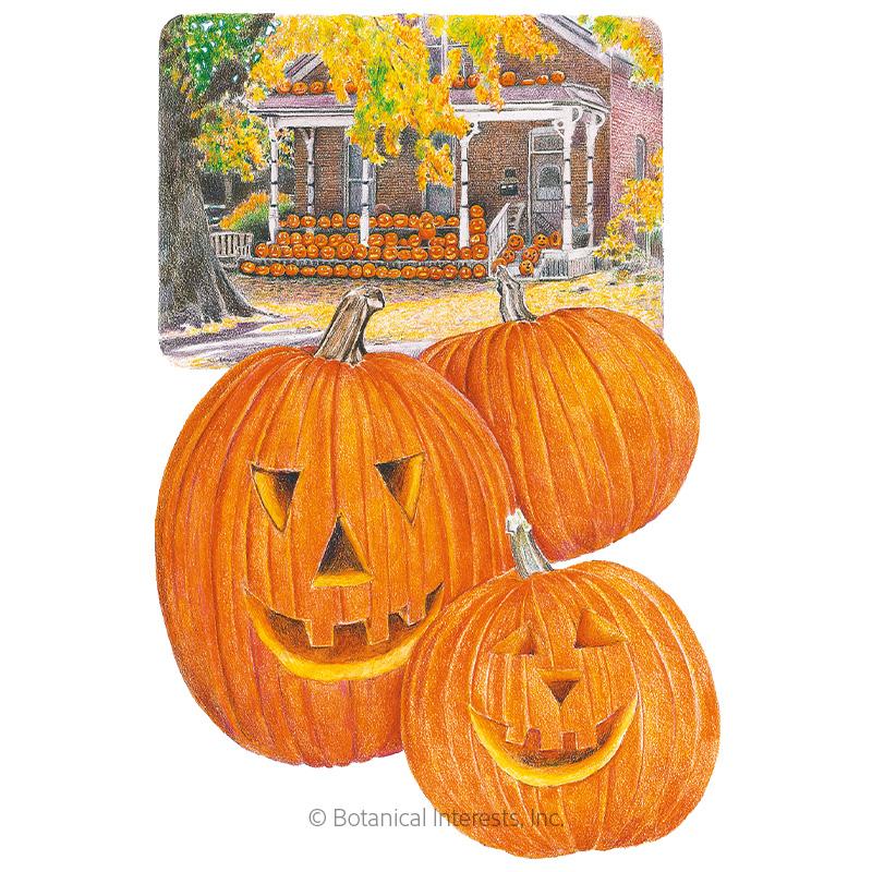 Jack O'Lantern Pumpkin Seeds
