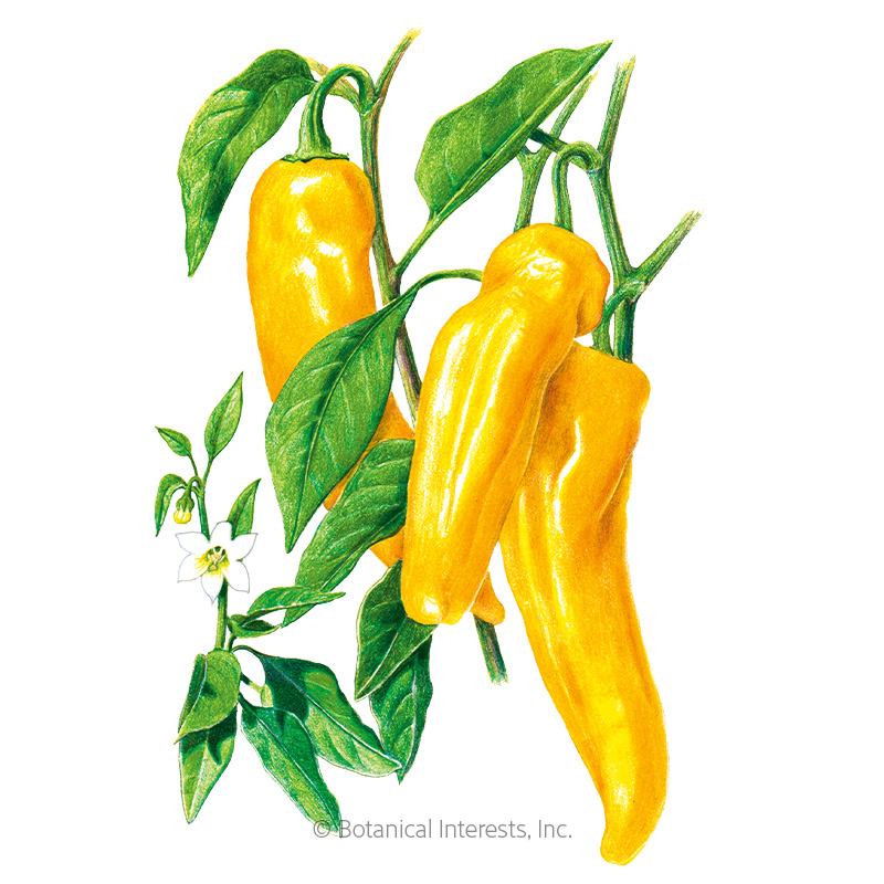 Golden Marconi Sweet Pepper Seeds