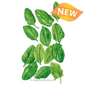 Oceanside Spinach Seeds - NEW
