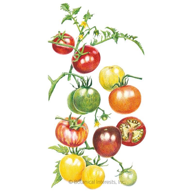 Rainbow Blend Pole Cherry Tomato Seeds