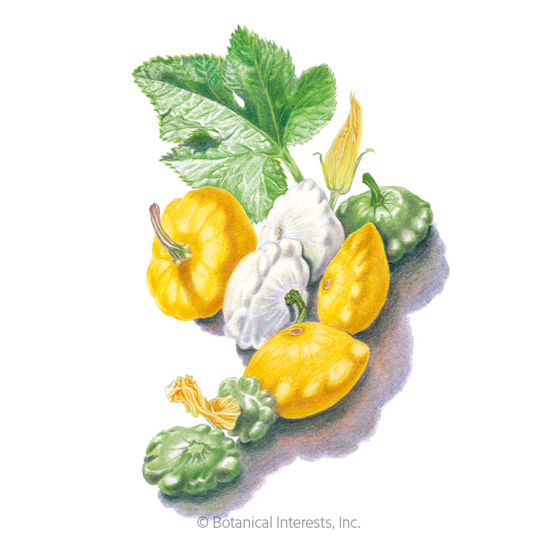 Scallop Blend Summer (Patty Pan) Squash Seeds