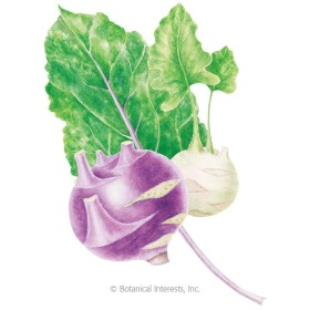 Purple & White Vienna Blend Kohlrabi Seeds