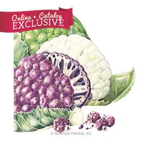 Chef's Choice Blend Cauliflower
