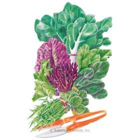 Asian Salad Greens Mesclun Lettuce Seeds