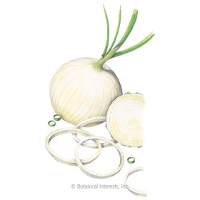 Ringmaster Bulb Onion Seeds
