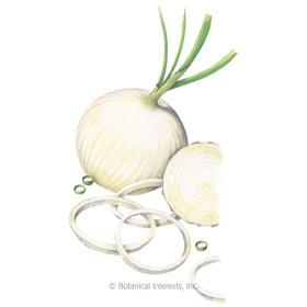 Ringmaster Bulb Onion Seeds