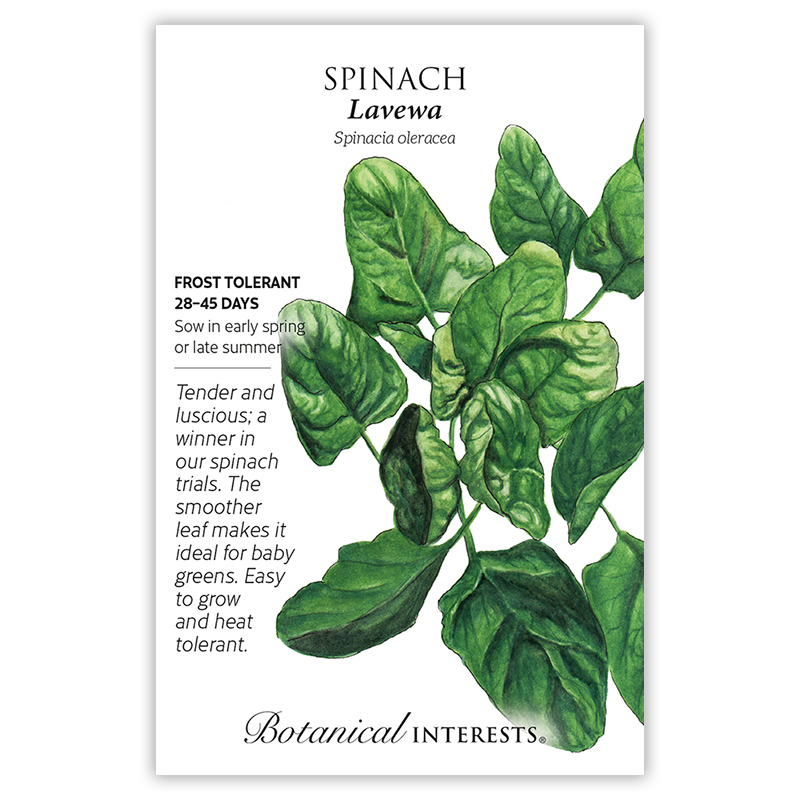 Lavewa Spinach Seeds