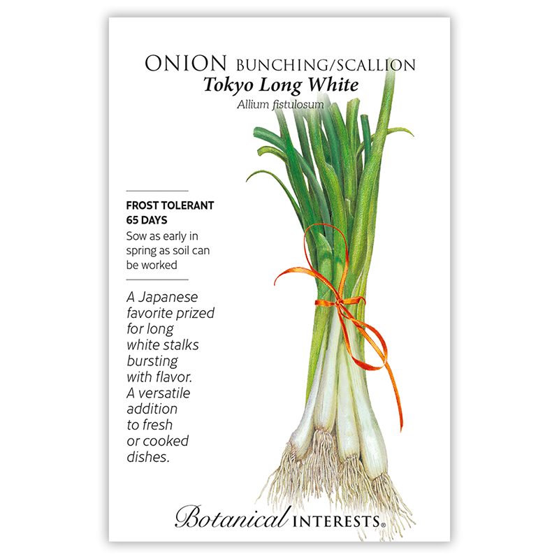 Tokyo Long White Bunching/Scallion Onion Seeds