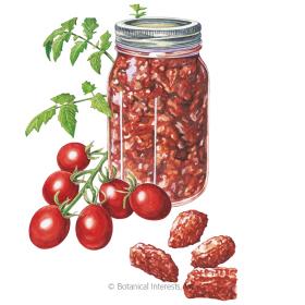 Principe Borghese Pole Tomato Seeds