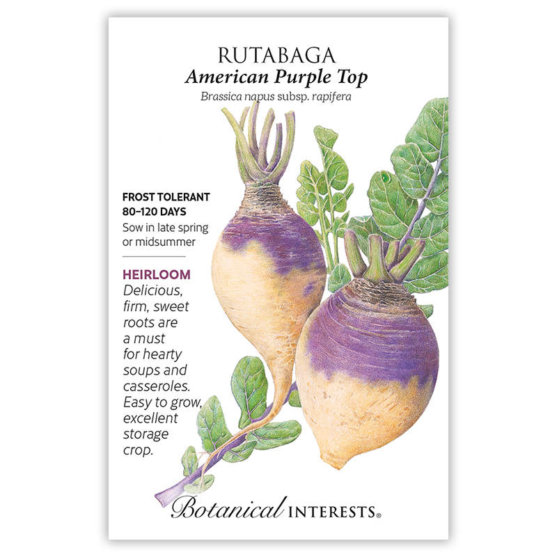 American Purple Top Rutabaga Seeds view 3