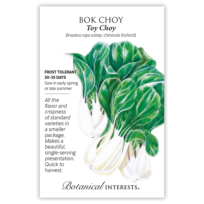 Toy Choy Bok Choy Seeds view 3