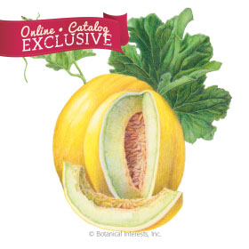 Canary Tweety Melon Seeds - Online Exclusive