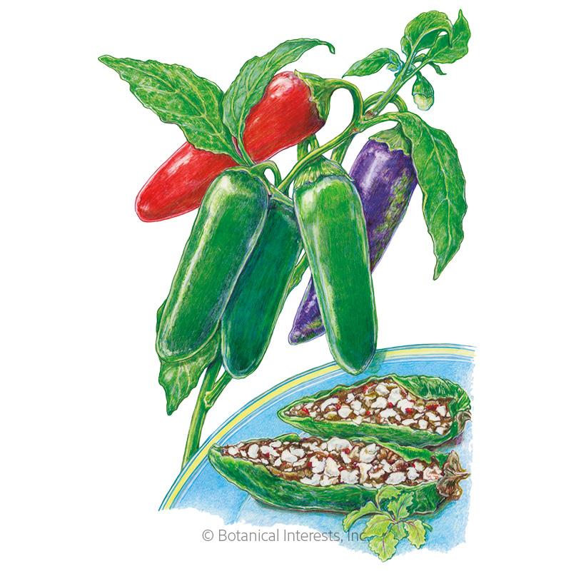 Jalafuego Jalapeño Chile Pepper Seeds