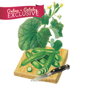 Baby Cucumber Seeds - Online Exclusive