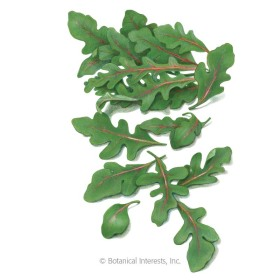 Red Dragon Wild Arugula (Rocket Salad) Seeds