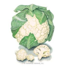 Early Snowball Cauliflower Seeds