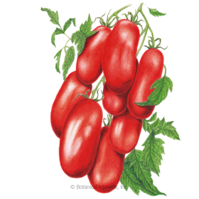 Supremo Bush Roma Tomato Seeds