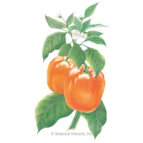 Coral Belle Sweet Pepper Seeds