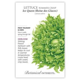 Ice Queen (Reine des Glaces) Summer Crisp Lettuce Seeds