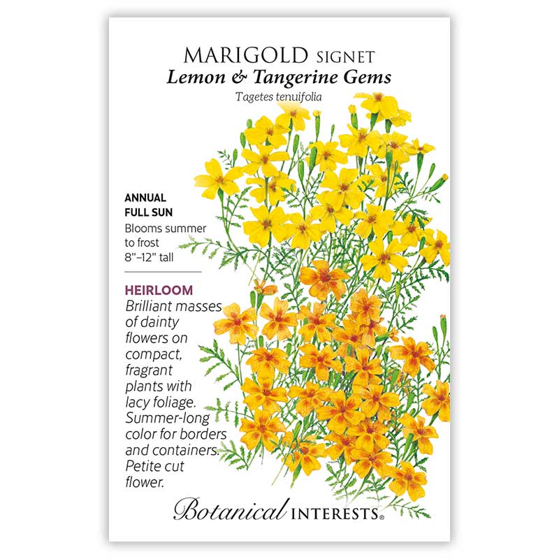 Lemon & Tangerine Gems Signet Marigold Seeds     view 3