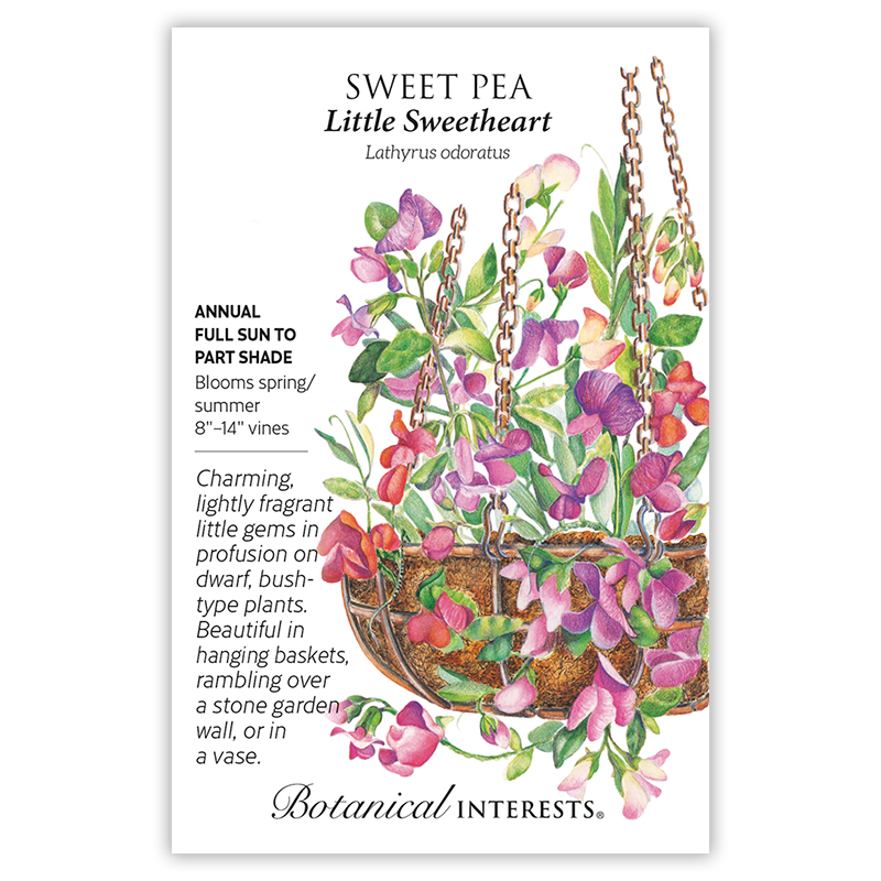 Little Sweetheart Sweet Pea Seeds