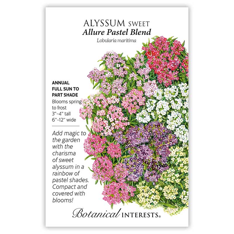 Allure Pastel Blend Sweet Alyssum Seeds    view 3