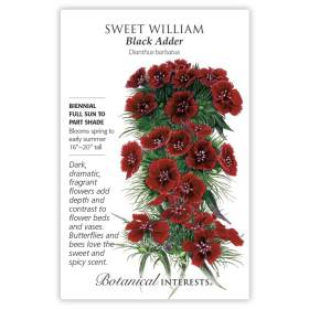 Black Adder Sweet William Seeds     view 3