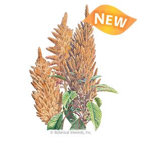 Hot Biscuits Amaranth Seeds