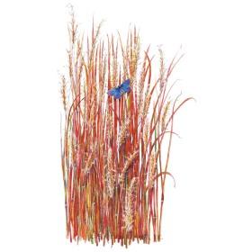 Little Bluestem Grass Seeds