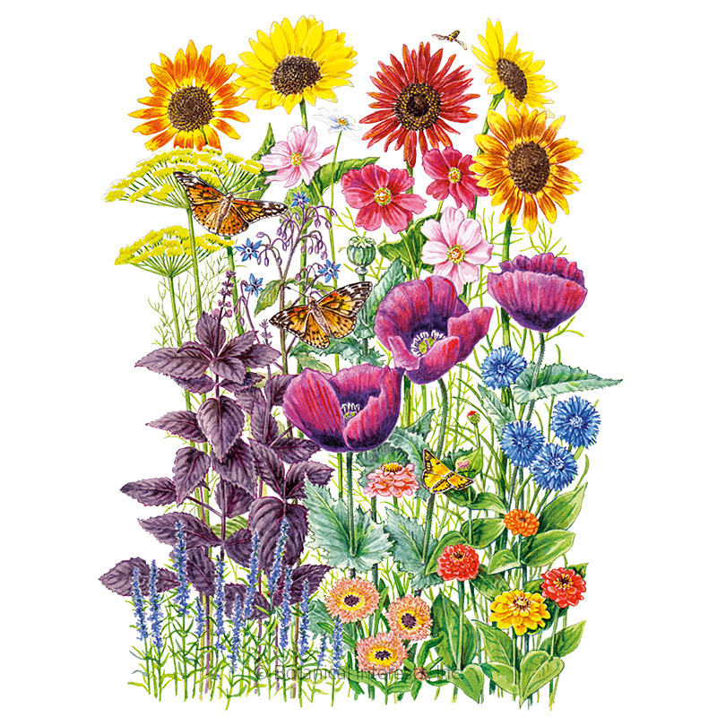 Pollinator Garden Flower Mix Seeds
