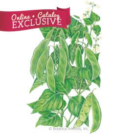 Henderson Bush Lima Bean Seeds