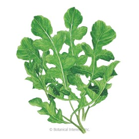 Roquette Arugula (Rocket Salad) Seeds     - Organic Heirloom